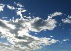 Drzewa też tworzą chmury - dowodzą naukowcy
