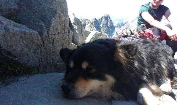 Sprowadzili psa, którego ktoś porzucił w Tatrach, na Rysach