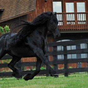 Jest pi�kny, dobrze urodzony i... jest koniem -