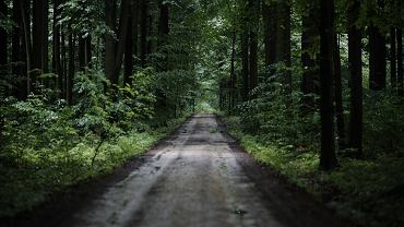 Wywieźli do lasu, chcieli wymusić 10 tys. zł