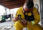 Wzruszające sceny z akcji gaśniczych w Kalifornii. Strażacy ratują zwierzęta z ogromnego pożaru