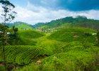 Z herbatą wśród słoni: wyprawa na Cejlon, część I