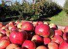 Przepisy na (#jedz)jablka