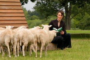 Scena zbrodni widziana oczyma owcy
