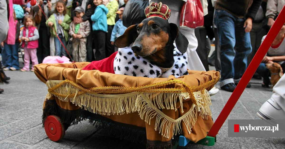 Pies O Zapachu Kokosa