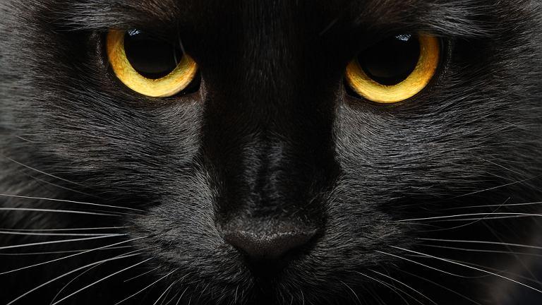 Czarny kot. Strach się bać
