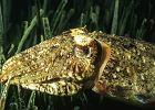 Dzika przyroda Europy - m�twa / fot. Animal planet