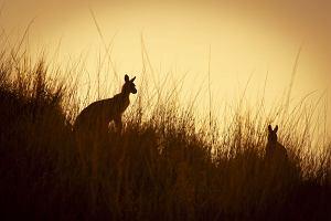 Wycieczka do Australii - 10 powodów, by odwiedzić Australię