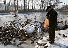 Ptasia grypa w samym centrum Wrocławia. Uwaga na zwierzęta domowe