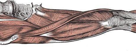 Noga Gray's Anatomy