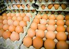 Szkodliwe bakterie w suszu jajecznym. Poziom przekroczony kilkaset razy