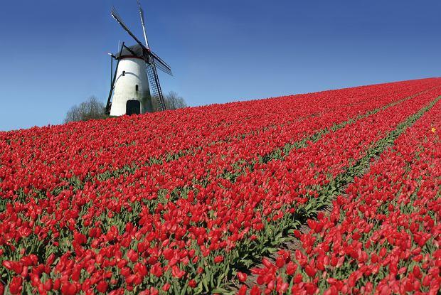 Holandia wakacje