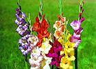 Kwiecie� - przesadzamy byliny, sadzimy krzewy