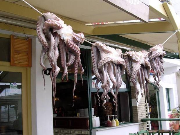 Kalmary i owoce morza zachwyci�y Brytyjczyk�w. W Polsce owoce morza to wci�� nisza