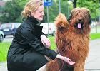Bezpieczny pies tylko z czipem