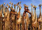Ranking. Najlepsze 2011. Afryka - top 10 miejsc
