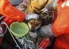Pies uratowany po trzech tygodniach od tsunami