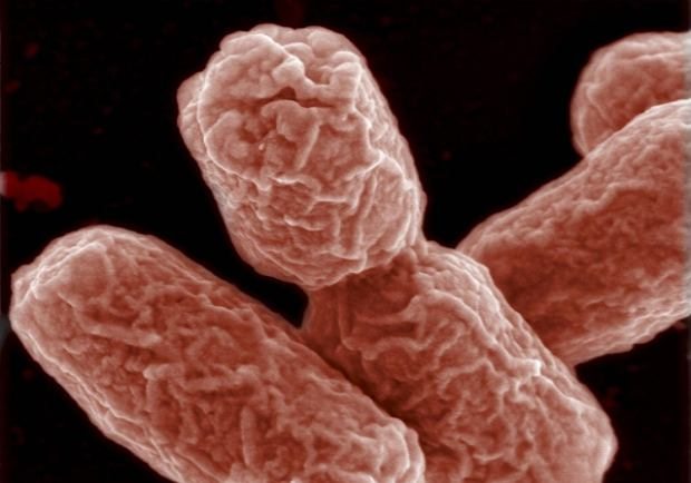 Trzeci Polak zaka�ony gro�n� bakteri�?
