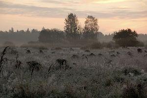 Rykowisko w Puszczy Białowieskiej