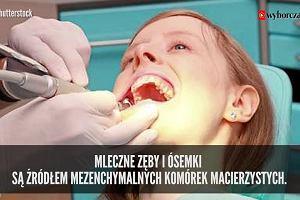 Nie wyrzucaj mlecznych zębów i ósemek. Mogą uratować zdrowie, a nawet życie