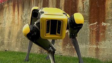 SpotMini - nowy robot Boston Dynamics