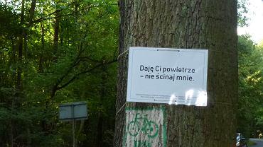 Puszczykowo. Na drzewach przeznaczonych do wycinki, protestujący zawiesili kartki z hasłami, które wygłosiłyby drzewa, gdyby umiały mówić
