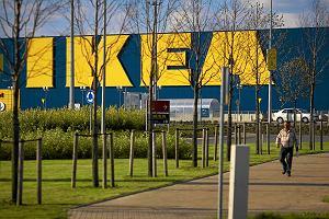IKEA, Lidl, LPP i Jeronimo Martins: to w tych firmach chcą pracować Polacy