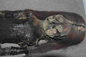 Najstarsze mumie na świecie rozkładają się. Taki mamy klimat