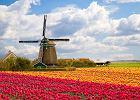Kwietne spekulacje dawnych Holendrów. Historie telewizyjne
