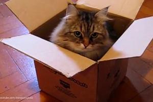 Koty kochają pudełka!