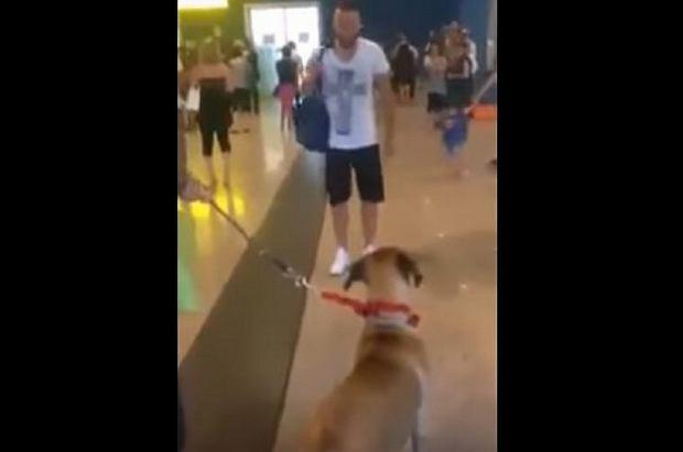 Pies na lotnisku