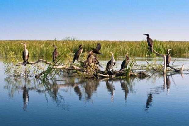 Delta Dunaju. Zobacz jedno z najdzikszych miejsc w Europie