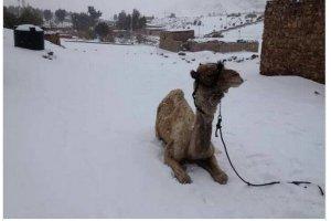 Chcesz zobaczy� �nieg? Pole� do Egiptu. W Kairze spad� po raz pierwszy od ponad 100 lat