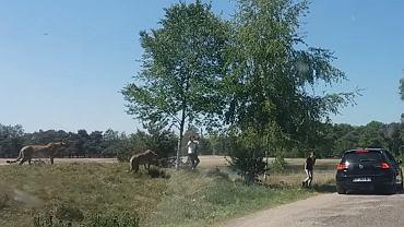 Goście parku safari wysiedli z auta obok stada gepardów