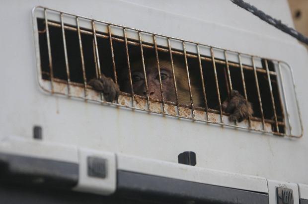 To 'najgorsze zoo na świecie'. Zwierzęta umierały tam z głodu przez konflikt między ludźmi