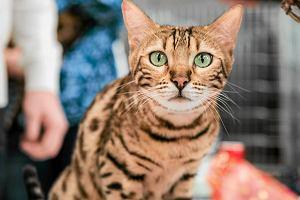 Koty to stuprocentowi mięsożercy! [Polemika]