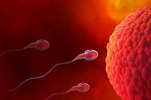 Na czym polega jajeczkowanie? Wyznaczanie owulacji
