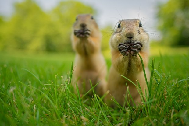Tu zwyci�aj� nieco INNE zdj�cia zwierz�t ni� zwykle [Comedy Wildlife Photography Awards]