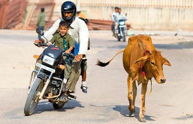 Indie - podróż po Radżasthanie, azja, podróże, jednoślad rodzinny