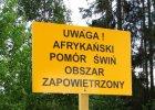 Afryka�ski pom�r �wi�. Jedna sz�sta rolnik�w rezygnuje z hodowli