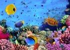 Rafa koralowa wok� Karaib�w ginie!