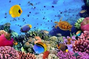 Rafa koralowa wokół Karaibów ginie!