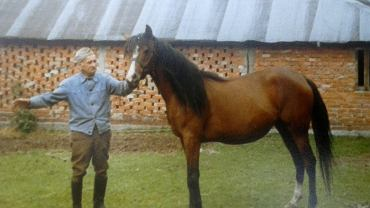 Zygmunt Braur, pierwszy prywatny hodowca koni arabskich w PRL