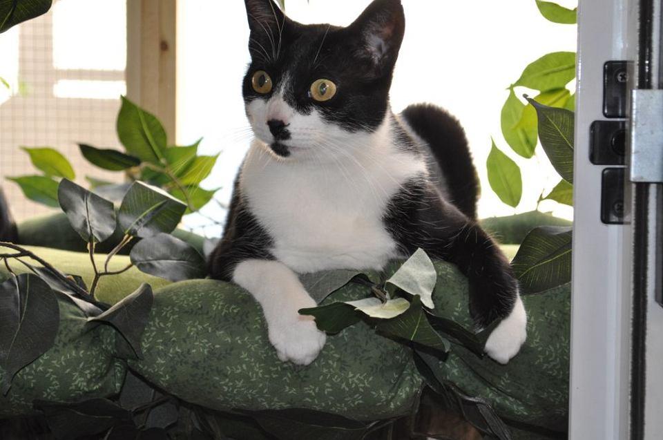Kot z piekła rodem