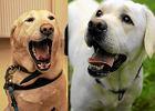 """Niekt�rym psom trzeba kupowa� bilety na poci�g. """"Absurd"""""""