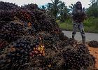 W Indonezji obrońcy lasu tropikalnego przegrywają w sądzie