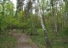 Wchodzą w życie przepisy dotyczące pierwokupu prywatnych lasów przez państwo