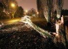 Ksawery po�ama� drzewa, pozrywa� linie energetyczne, zabi� 26 kr�w. Dwie szko�y bez lekcji