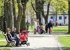 Sopot odtwarza uliczne szpalery drzew sprzed 100 lat. Każdy może wziąć w tym udział za pomocą ankiety w 3D