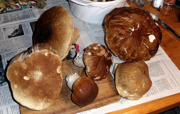 Fakty i mity o grzybach